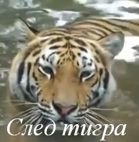 Смотреть фильм След тигра 2014